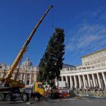 ??rvore de Natal chega à Praça São Pedro para ornamentação