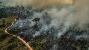 Papa faz apelo pela Amazônia: controlar os incêndios o quanto antes